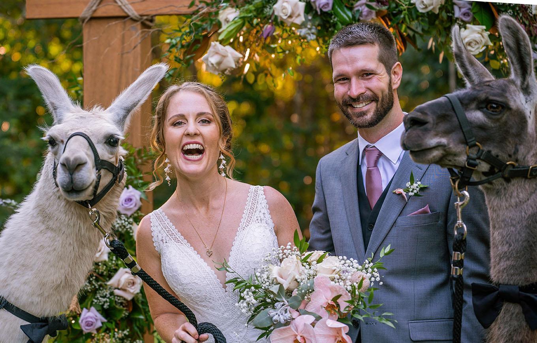 Wedding Photography with Alpacas