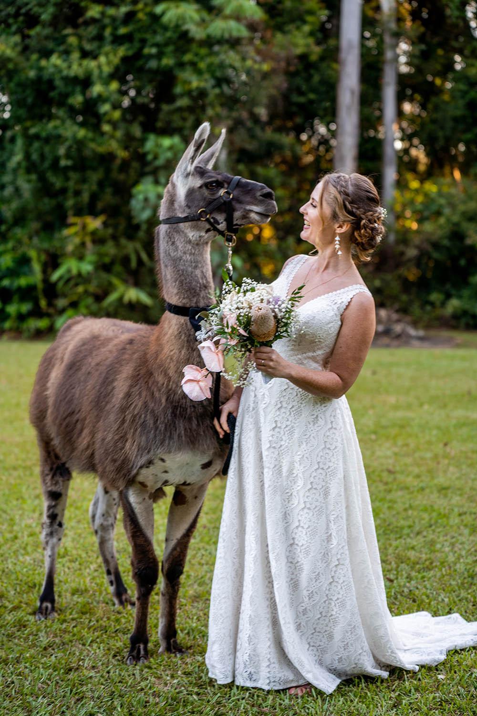 Wedding Photography - Bride with alpaca