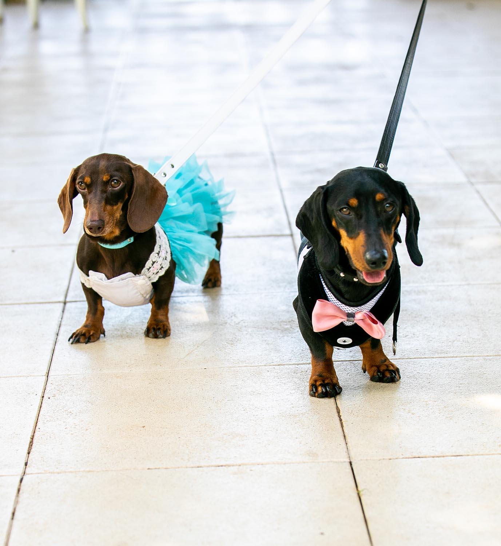 Wedding Photography - Sausage dogs