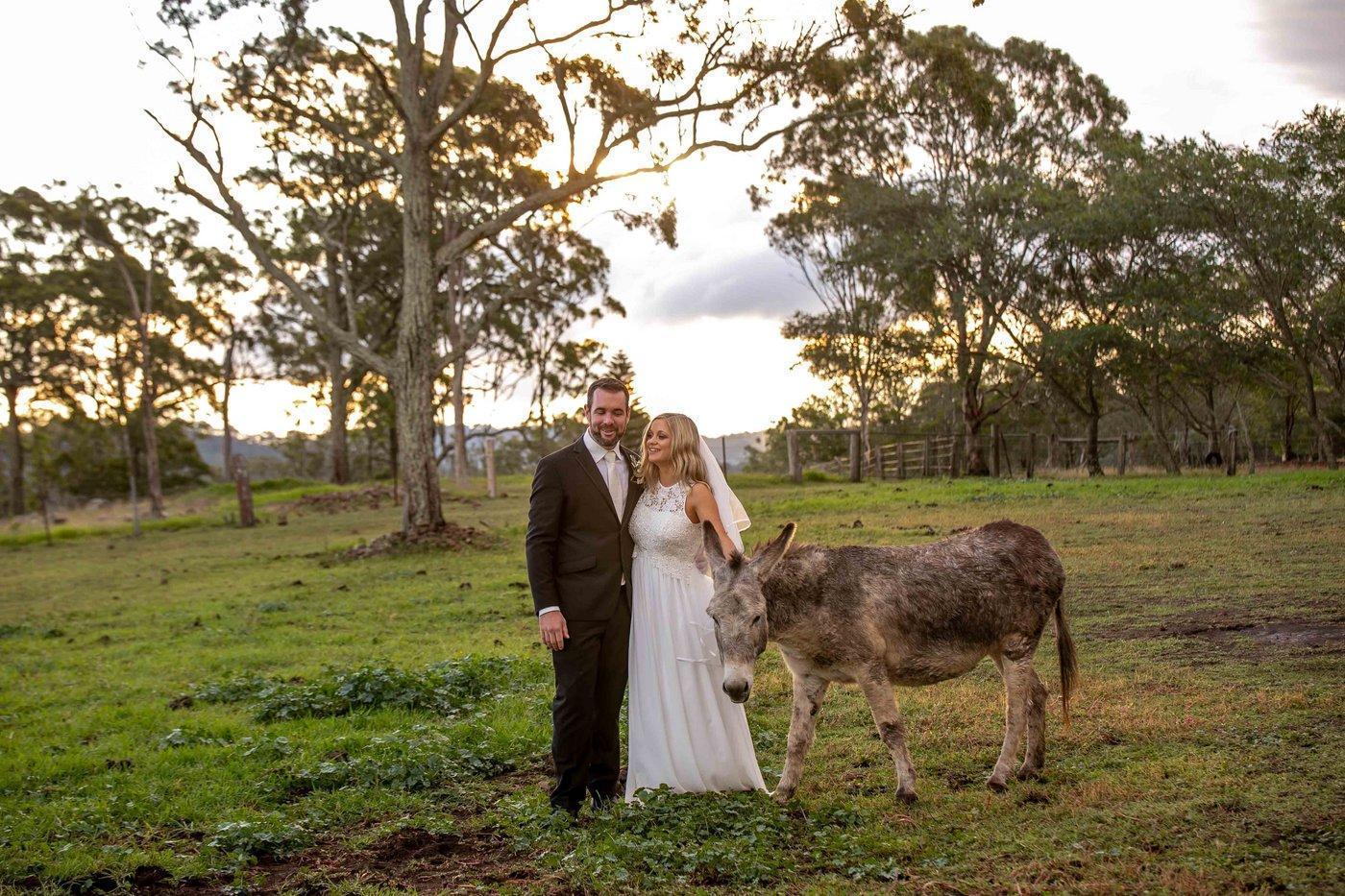 Wedding Photography couple with donkey